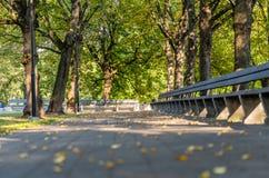 Tomt parkera bänkar i Sunny Autumn Day With Golden Leaves i träd, Lettland, Europa, begrepp av att koppla av loppdag i fred och arkivbilder