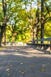 Tomt parkera bänkar i Sunny Autumn Day With Golden Leaves i träd, Lettland, Europa, begrepp av att koppla av loppdag i fred och royaltyfria foton