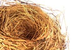 tomt rede för fågel royaltyfri foto