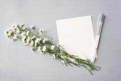 Tomt vitt kort med pennan Arkivfoton