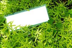 Tomt vitt plakat på den lilla gröna växten Crassulaceaesuckulent, angelinasedum Royaltyfria Bilder