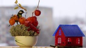 Tomtit, de winterzorg van de vogels, Kerstmis stock videobeelden