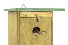 Tomtit entering wooden bird house Royalty Free Stock Photos