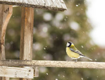 Tomtit. Sitting on a birdfeeder royalty free stock image
