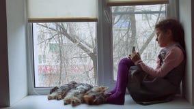 Tonårig flicka spela direktanslutet leken för sammanträde för smartphone och för älsklings- hund på rengöringsduk för fönsterföns arkivfilmer