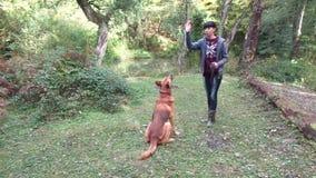 Tonårig hund för flickautbildningsherde i skoggläntan arkivfilmer