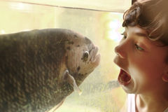 Tonårig pojke som förlöjligar fisken i akvarium royaltyfri foto