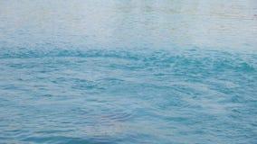 Tonåringen hoppar in i simbassäng arkivfilmer