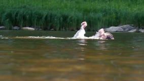 Tonåringen simmar från från vänster till höger längs floden förbi vasserna tillbaka simning Semester och lopp Sommar arkivfilmer