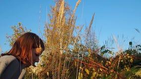 Tonåringflickan i ett grått lag går över till öronen av torrt gräs och blickar på dem på en solig dag stock video