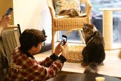 Tonåringpojken i kattkafé gör fotoet av slut för maine tvättbjörnkatt upp fotoet royaltyfria bilder