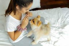Tonårs- flicka för blandat lopp som undervisar den pomeranian hunden att göra ett trick på sängen fotografering för bildbyråer