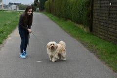 Tonårs- flicka som hundbarnvakt Arkivfoton