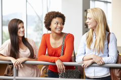 Tonårs- studentflickor som inomhus pratar Arkivfoton
