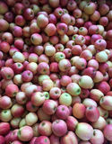 A Ton of Apples. A closeup of the inside of a large crate of red and yellow apples at a farmers market Royalty Free Stock Image