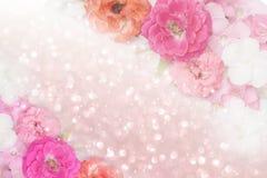 Ton de pastel de fond de scintillement de frontière de fleur de roses Photos libres de droits