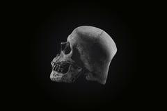 Ton toujours d'obscurité de crâne de la vie Photographie stock libre de droits