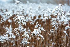 Tonad abstrakt bild av vinterunderland Fotografering för Bildbyråer