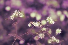 Tonad blom- bakgrund för design med ett ställe för en inscripti Fotografering för Bildbyråer