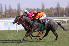 Tonak race - horse racing in Prague Royalty Free Stock Photo