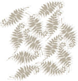 Tonal fern design Stock Photos