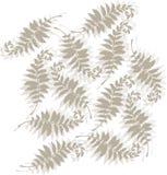 Tonal fern design. Decorative allover tonal fern design Stock Photos