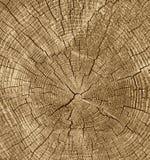 Tonalità del taglio del primo piano retro del fondo di legno di struttura Fotografie Stock Libere da Diritti