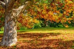 Tonalità dell'albero e delle foglie di autunno immagini stock