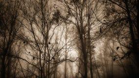 Tonalità della foresta di seppia Immagini Stock