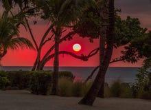 Tonalità di arancio - tramonto nella foresta fotografie stock