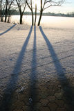 Tonalità di inverno Fotografia Stock