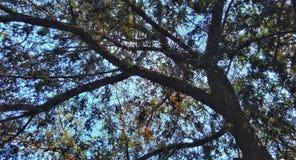 Tonalità di un albero fotografia stock libera da diritti