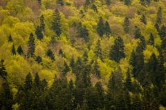 Tonalità di verde nel paesaggio della foresta Immagine Stock