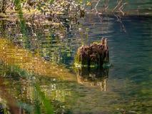 Tonalità di verde sul lago rosso fotografia stock libera da diritti