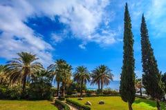 Tonalità sottile delle palme Fotografia Stock Libera da Diritti