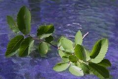 Tonalità varianti di verde e di blu Fotografie Stock Libere da Diritti