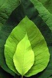 Tonalità verdi Immagine Stock