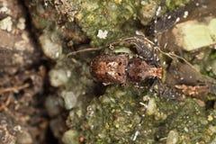 Tonchio del fungo dalla parte superiore Fotografie Stock Libere da Diritti