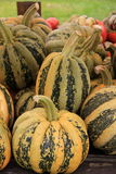 Tondo,One of the most sought after Fall squash Stock Images
