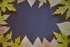 Toned autumnal background - frame of autumn leaves on a dark blue background. Place for text Stock Photos