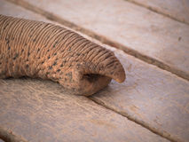 Toned image of an elephant trunk. On the background of old boards royalty free stock images