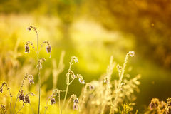 Toned image of meadow flowers. Royalty Free Stock Photography