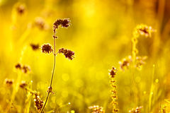 Toned image of meadow flowers. Royalty Free Stock Photos