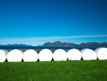 Toned image of the row of plastic wrapped hay bales on a green field on the background of mountains Royalty Free Stock Photography