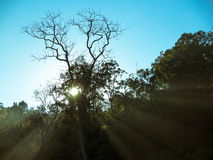 Toned image of a sunrise with rays shining through the leaves on a background of clear sky Royalty Free Stock Images