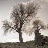 Toned image of two almond trees and ruins in abandoned village in Tylliria, Cyprus Royalty Free Stock Image