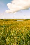 Toned long grass and bogland with wind turbines Stock Photos