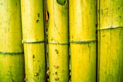 Toned and painted bamboo background with circles in the middle of every pylon. Yellow green vintage bamboo fence background texture with rope tide, cracked parts Stock Photos
