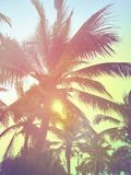 Toned palms background. Pink and violet tones Royalty Free Stock Photos