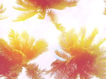 Toned palms background. Pink and violet tones Royalty Free Stock Photography